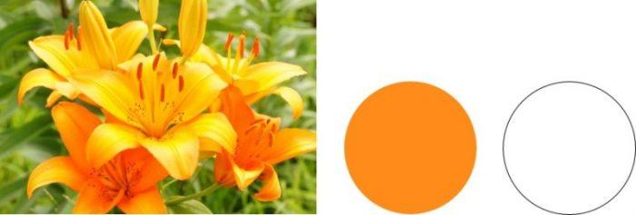 パーソナルカラー ウィンター オレンジ